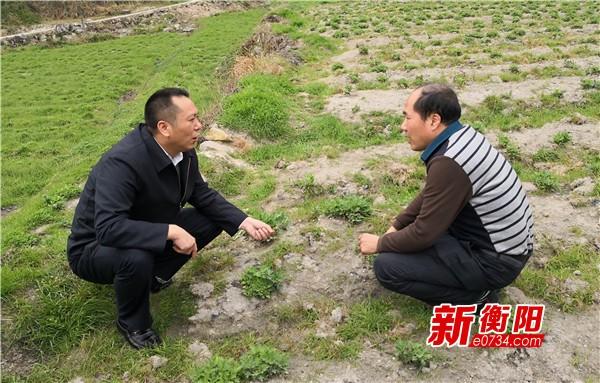 """南岳区委考察组为""""贵妃凰菊""""产业项目把脉开方"""