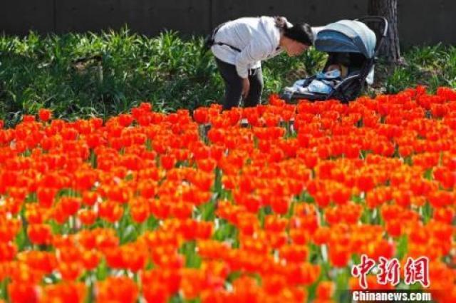↑近日,上海气温回升,市民带着孩子在静安雕塑公园享受春意。殷立勤 摄