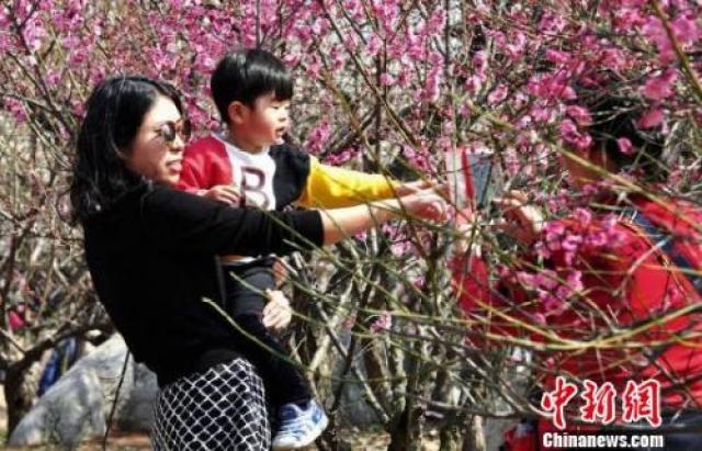 ↑3月12日,徐州民众纷纷相约龟山景区探梅园,前来踏青赏梅,感受春天的气息。 海辉 摄