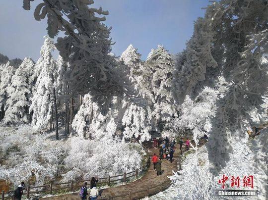 安徽黄山山脚红梅绽放 山顶白雪皑皑