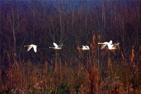【美丽中国长江行】生态常德:寻找与自然和谐相处的新方式
