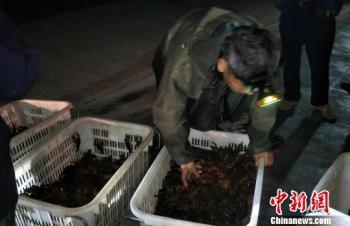 """""""小龙虾""""撑起洞庭湖区百亿元绿色新产业"""
