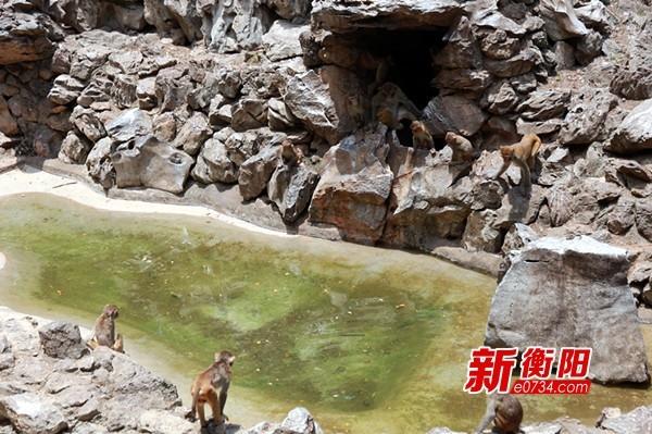 """暑假去哪儿:去衡阳市动物园""""遛娃""""探索大自然"""