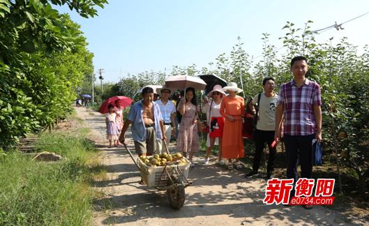 衡南三塘镇近5万斤有机翠冠梨滞销 农户急盼销路
