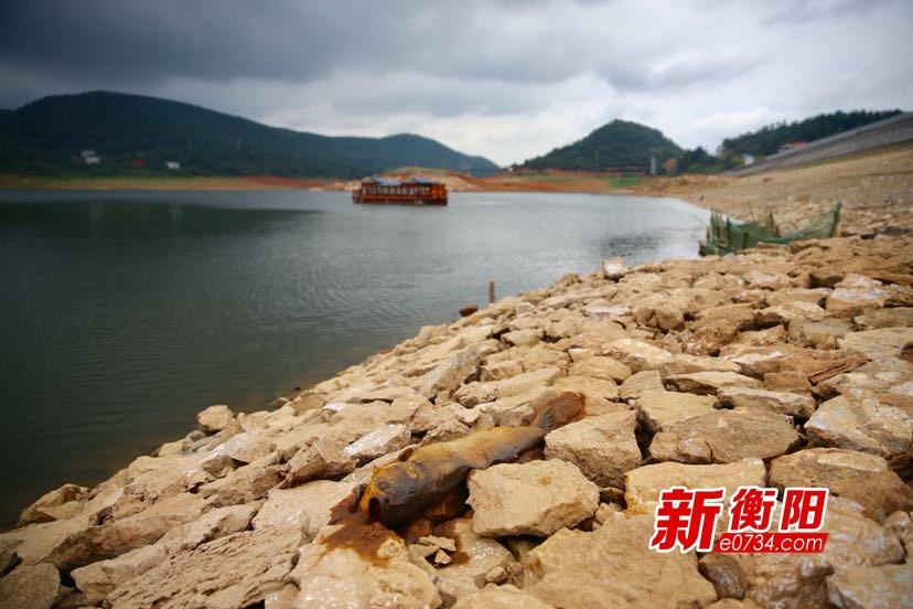 多水库现死水位 衡南县精心部署打好抗旱攻坚战