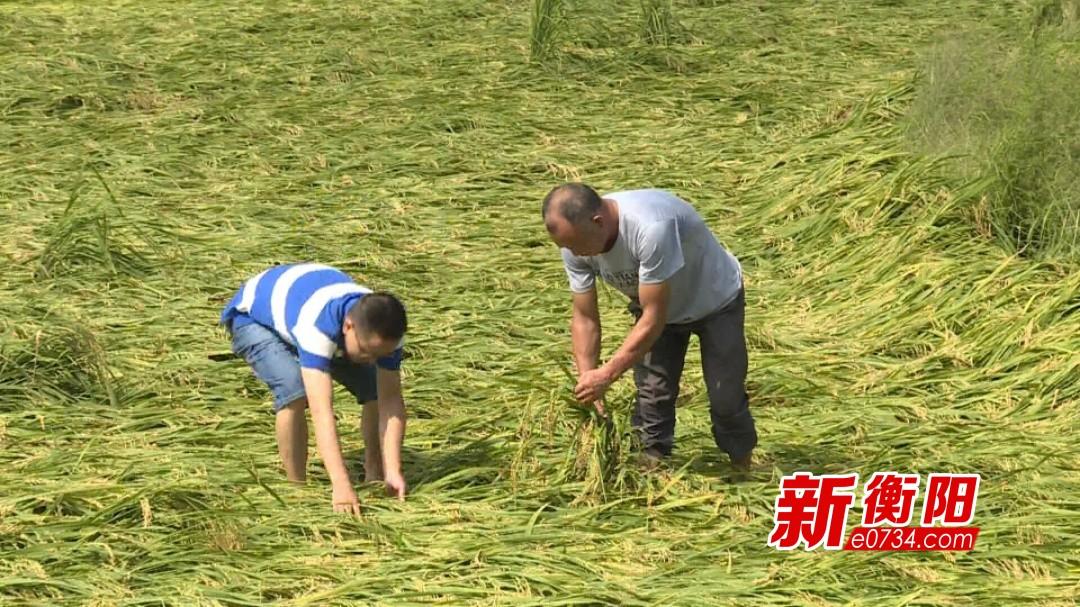 狂风暴雨农田被淹 衡南泉湖镇2000亩稻田受灾