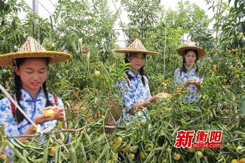 第五届乡村生态旅游节开幕 甜脆的冬枣等你来摘