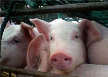 湖南省政府部署非洲猪瘟等动物疫病防控工作
