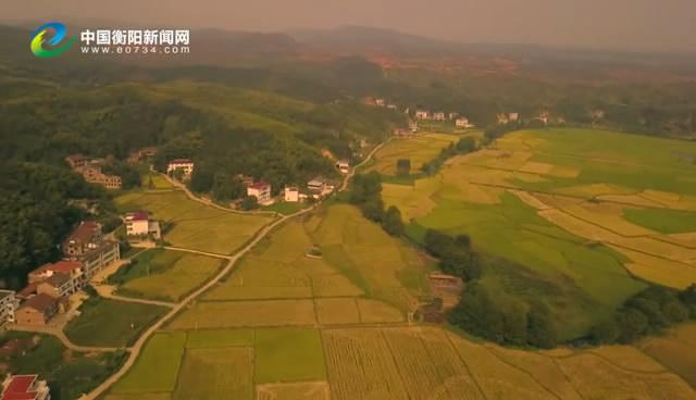 瞰・衡阳之金秋水稻丰收