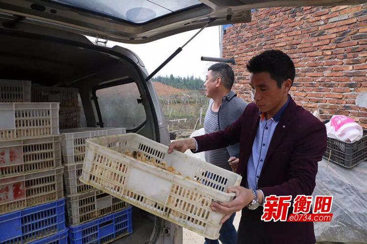 """最美扶贫人①周凌峰以""""茶山鸡""""带领村民脱贫致富"""