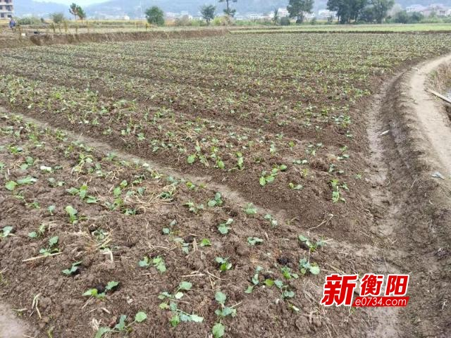 """衡东合江村种养业托起""""乡村振兴""""脱贫致富梦"""