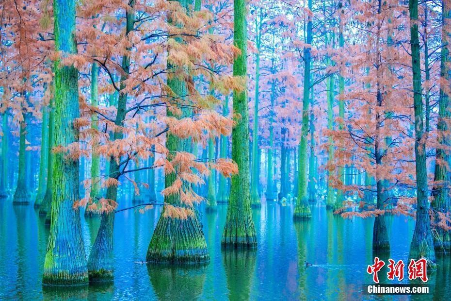 武汉新洲涨渡湖湿地初冬美景宛如仙境