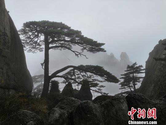安徽黄山风景区迎降温 壮观云海似澳门威尼斯人官网水墨画