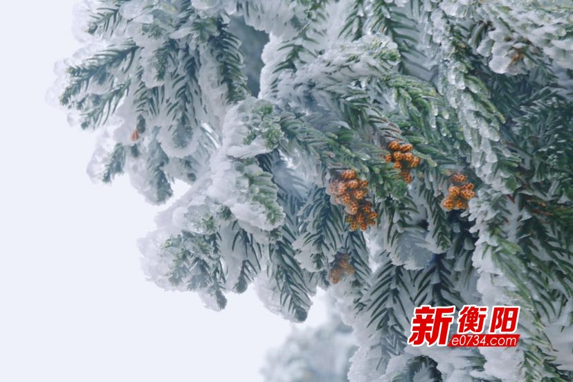 南岳衡山景区雾凇美如仙境 邀游客邂逅冰雪浪漫