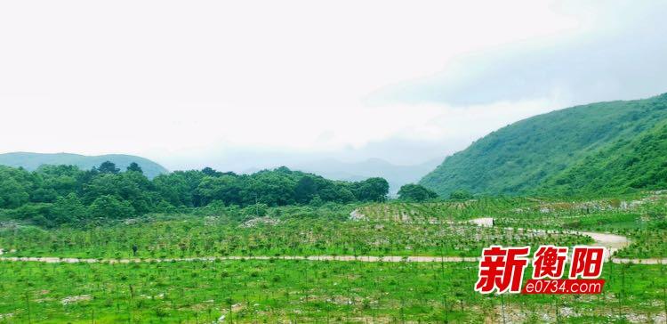 常宁大义山矿区栽种苗木22万株 复绿近500亩