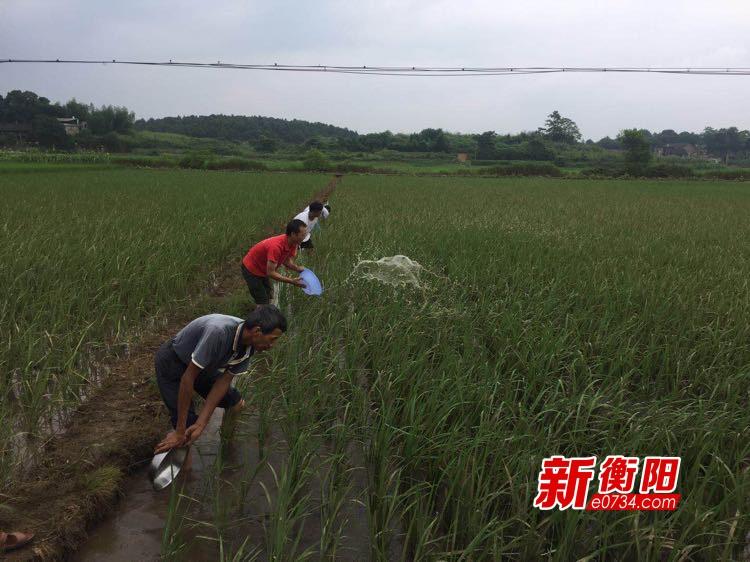洪水过后保民生 常宁争分夺秒抢抓农业生产恢复