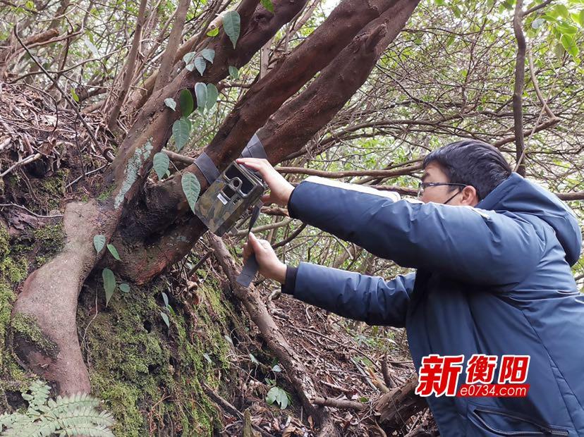 南岳景區增設11部紅外相機 加強野生動物監測和疫情防控
