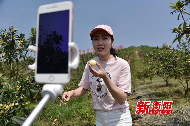 """假期去哪儿:""""枇杷熟了"""" 衡东县洣江生态园采摘季来了!"""