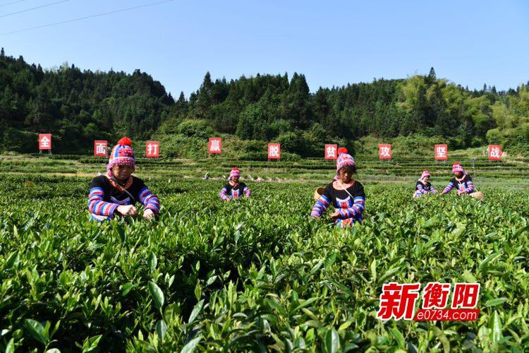 """5·21首个国际茶日:常宁塔山茶发出""""绿色+健康""""倡议"""