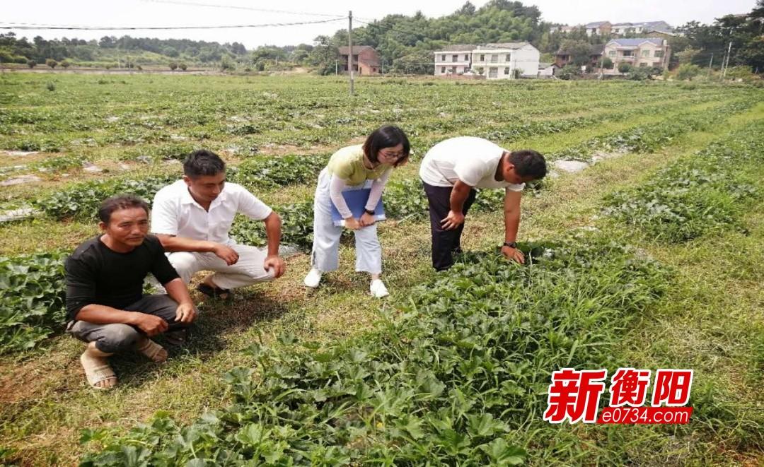 抗疫情·保增长|衡东县科技专家对接电商助力农户甜瓜销售