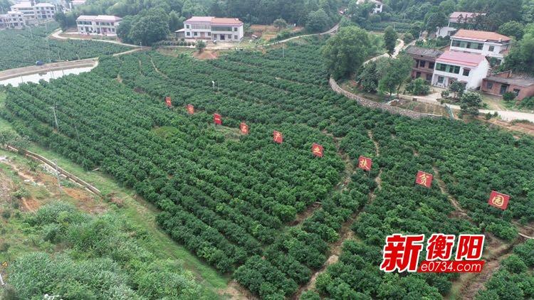 决胜2020·衡阳扶贫印记⑧龙凤村特色水果种植甜蜜生活
