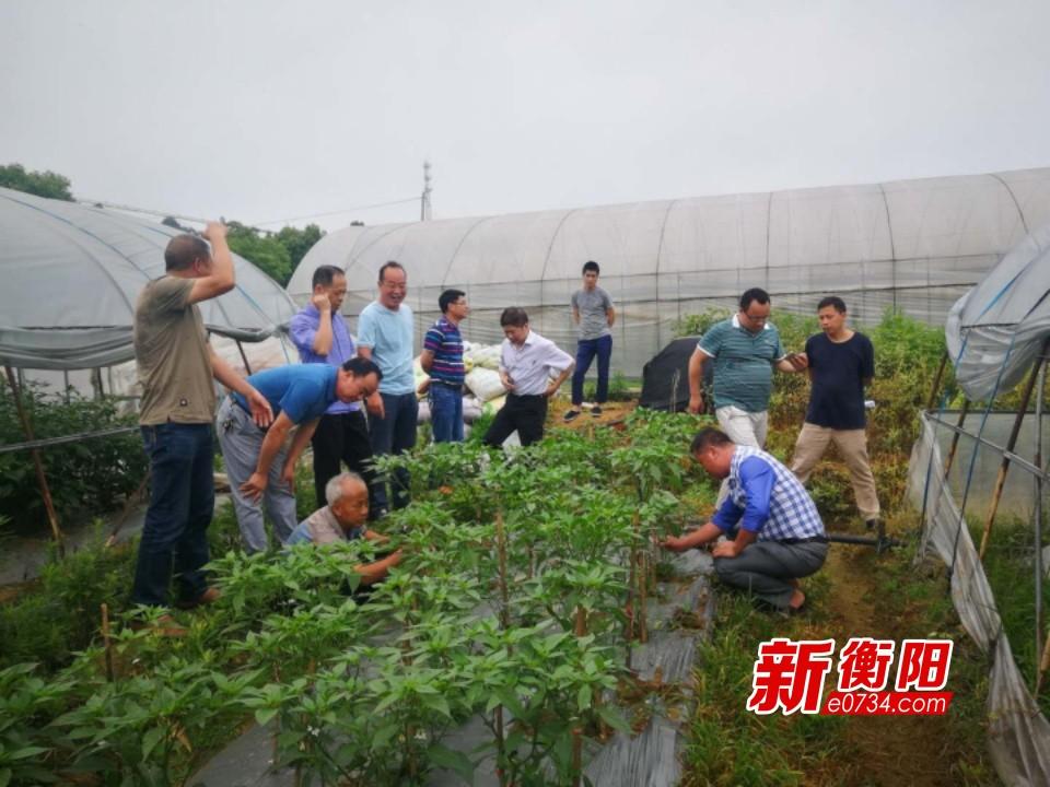 """衡东县科技专家服务团""""村播带货""""  助力脱贫攻坚"""
