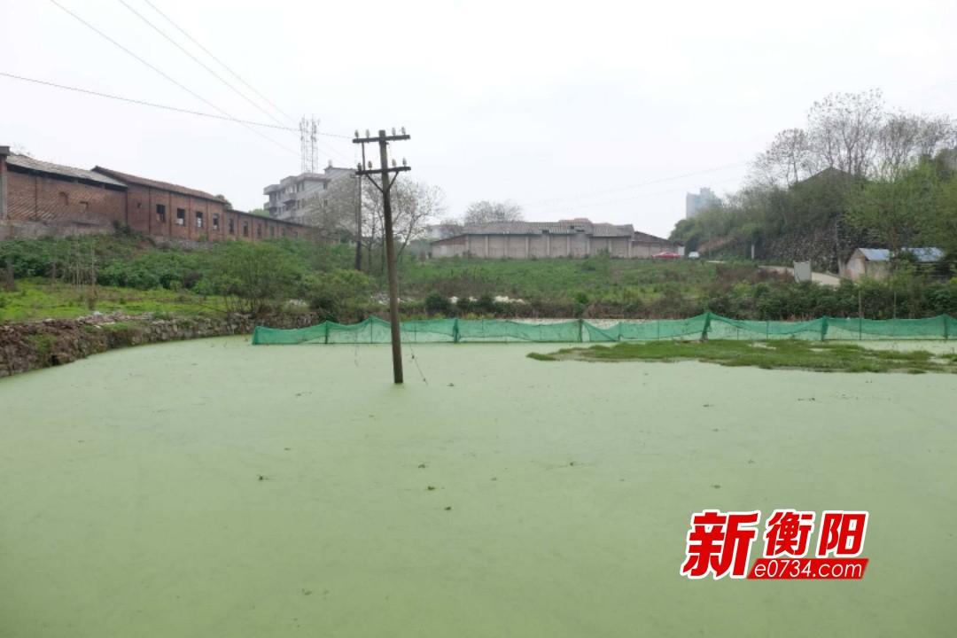 猪场关停搬迁后 珠晖区湖东村环境大变样