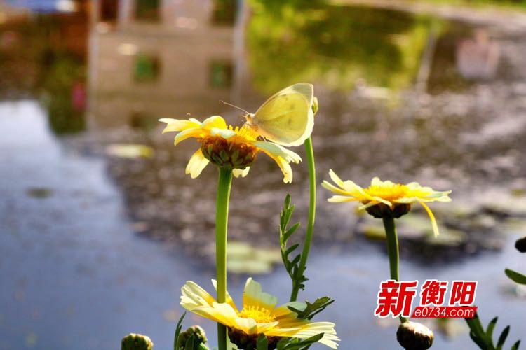 """衡阳天气逐渐重回晴好模式 周末偶有阵雨""""乱入"""""""