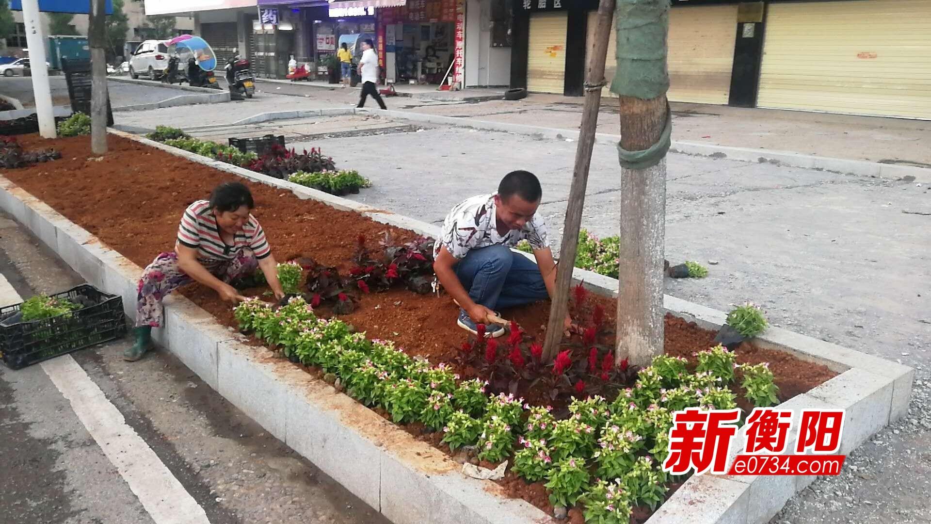 衡阳市园林局加班加点对城区公共绿地进行美化