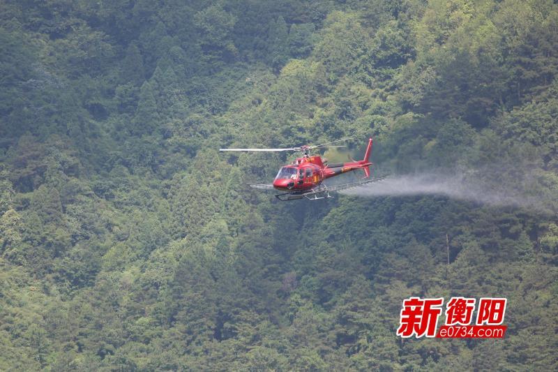 气温持续攀升 南岳区动用直升机防治森林病虫害