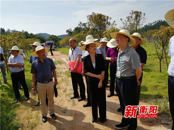 环保督查:南岳衡山国家自保区采矿企业全部关停