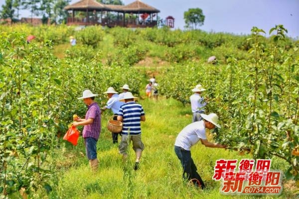 中国衡阳新闻网 新疆十一选五app www.7q087.cn