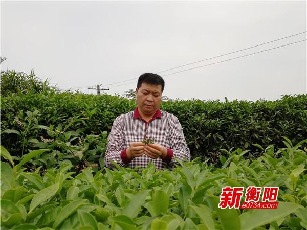 """最美扶贫人③茶香情长""""煤老板""""刘海坚的新选择"""