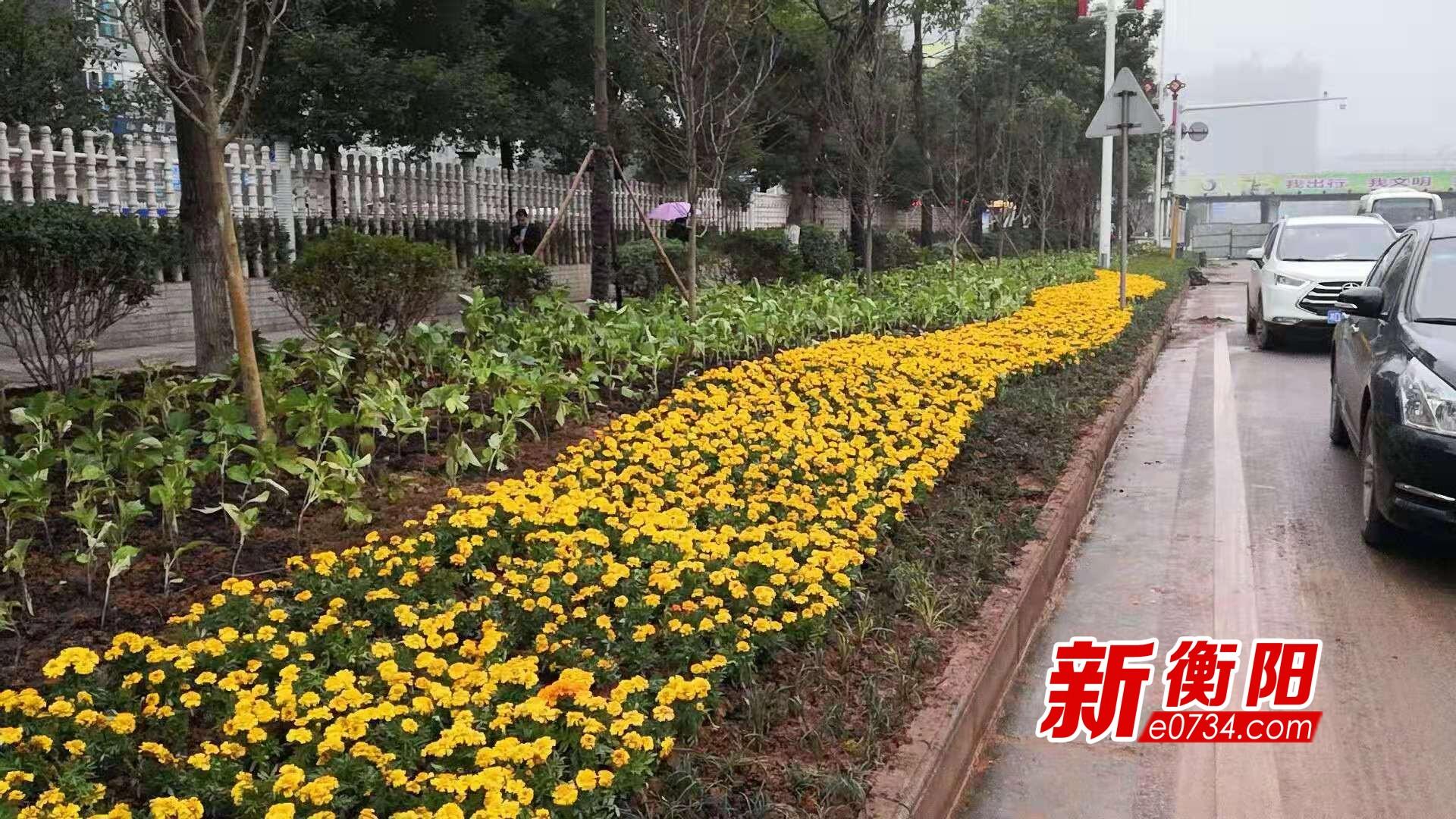 大美衡阳繁花盛 园林工人抢种耐寒花卉迎接2019