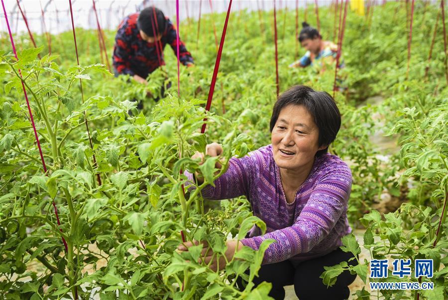 (经济)(2)河北深州:建设现代农业园区助推乡村振兴