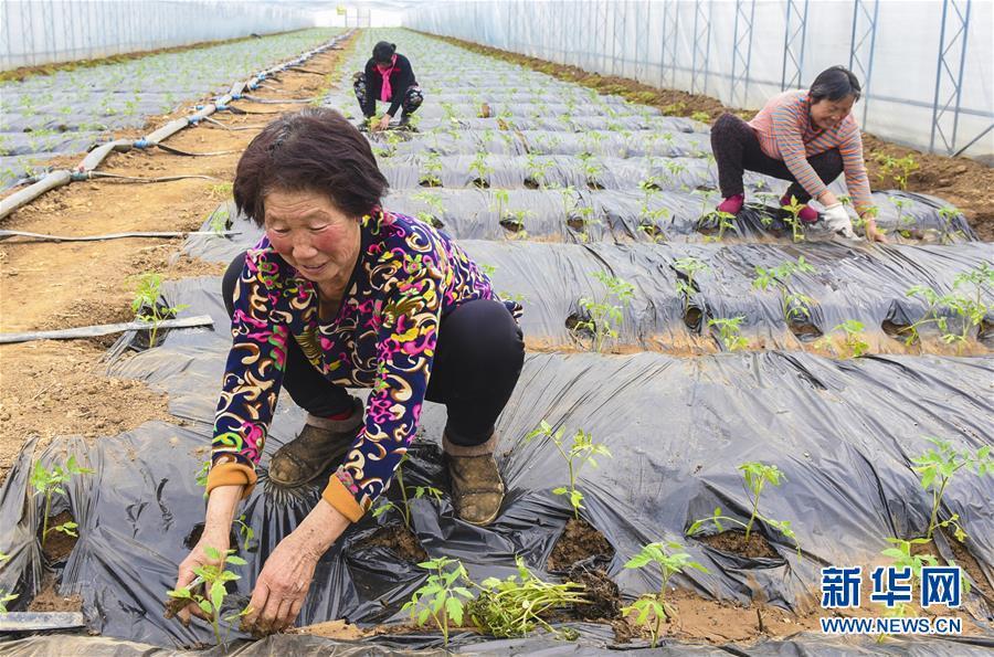 (经济)(1)河北深州:建设现代农业园区助推乡村振兴