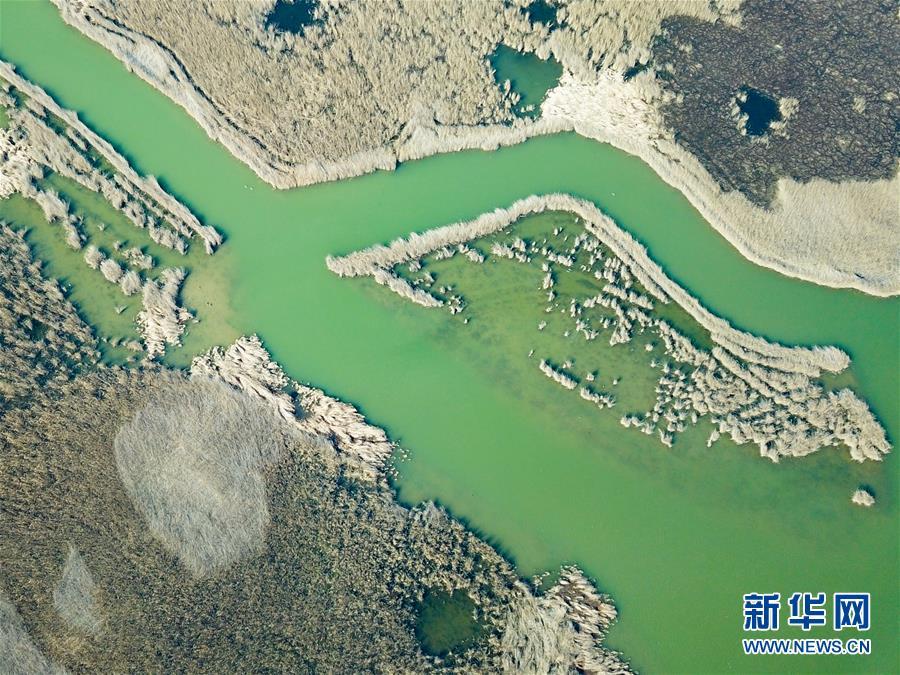 (环境)(4)鸟瞰黄河口湿地风光