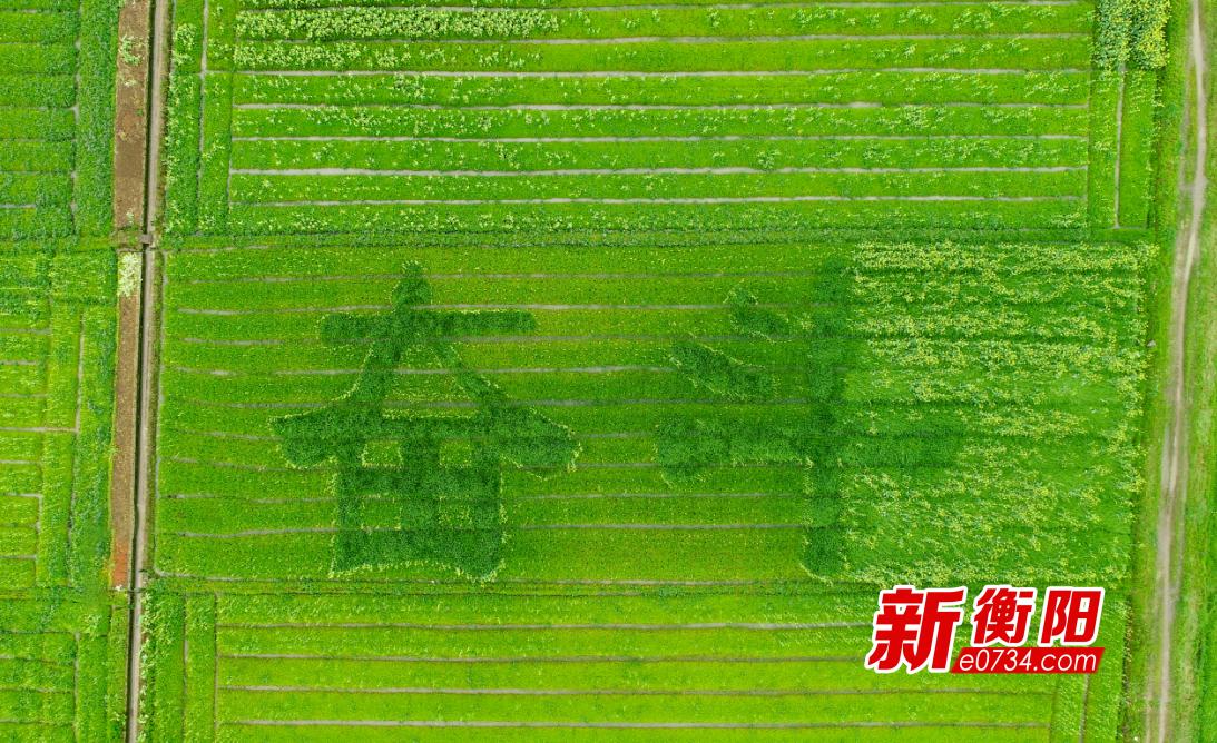 """常宁胜桥镇除了老九碗 还有名为""""奋斗""""的油菜花"""