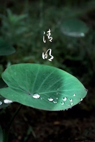 【地评线】清明出游,文明是一抹宜人的绿