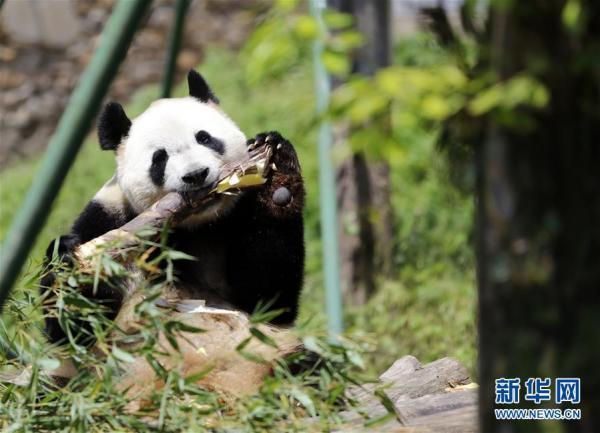中国衡阳新闻网 www.bsdml.club