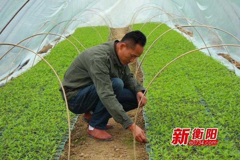 棄毒從耕——衡陽縣農民企業家陳衛星的反轉人生