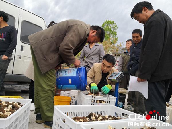 【壯麗70年·奮斗新時代】種啥能增收?甘孜州川藏公路第一村的謀發展之路