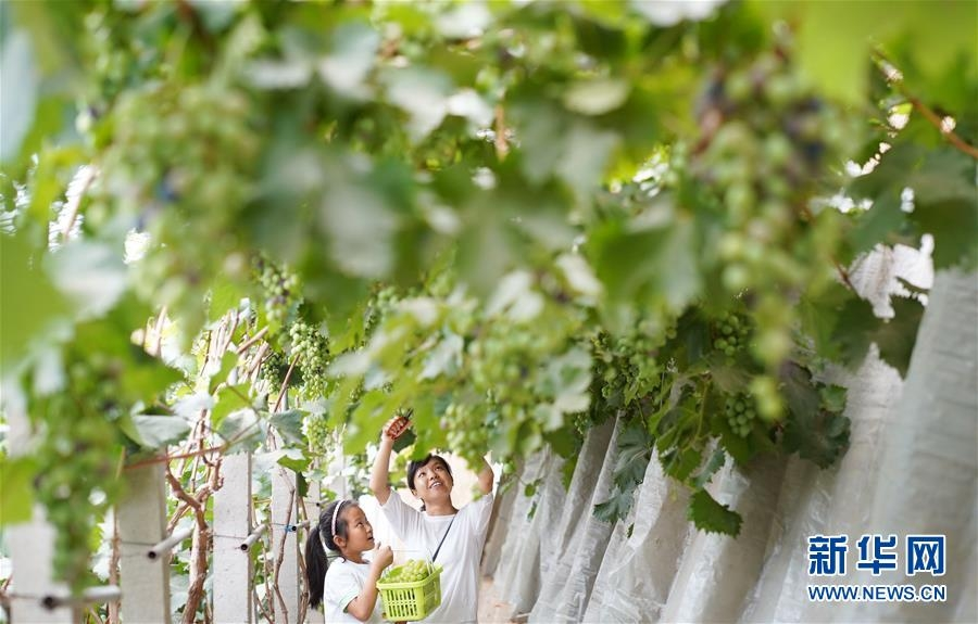 河北內丘:設施農業助推鄉村振興