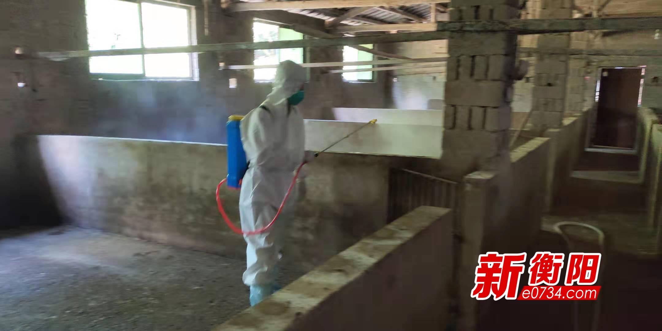 南岳打响灾后动物防疫战 帮助受灾户尽快恢复生产