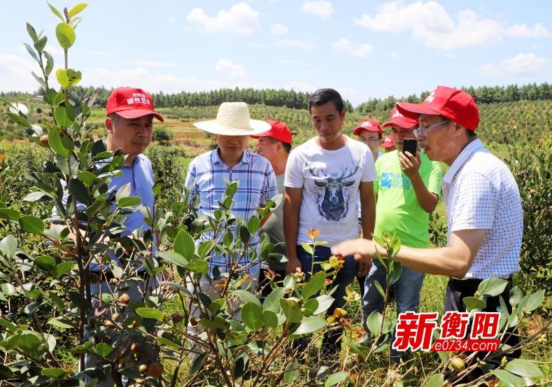 林业专家实地教学 挽救1400余亩受灾油茶幼林