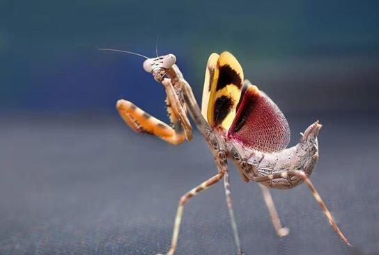 千余種昆蟲亮相第二屆昆蟲藝術科普展