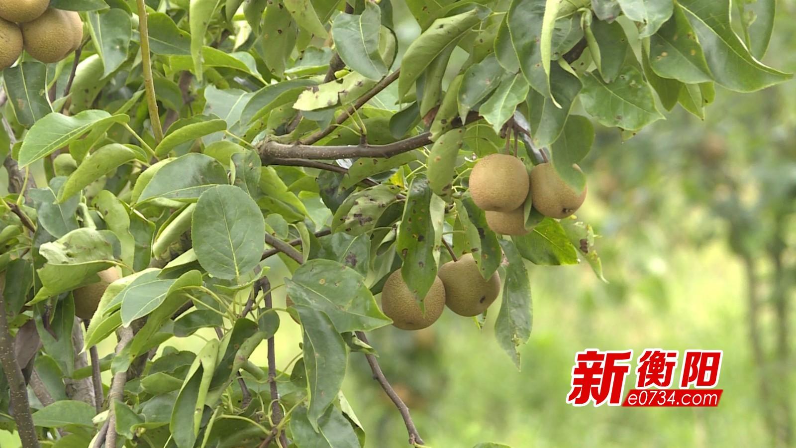 打赢脱贫攻坚战:衡南县贫困户家门口就业勤劳致富
