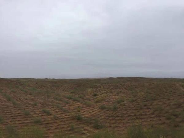 寧夏治沙樣本:讓沙漠倒退20多公里,為世界貢獻中國經驗