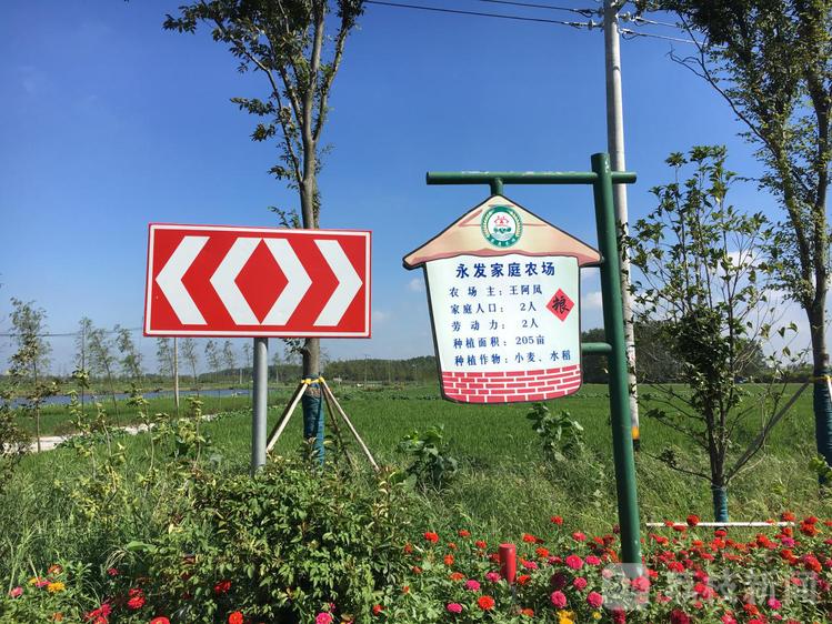 """鄉村振興在行動丨有""""顏值""""有""""氣質""""!泰州的新農村有了新模樣"""