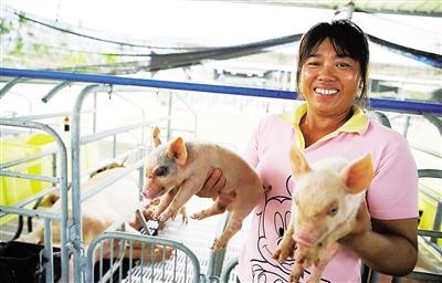 农业农村部:生猪生产恢复发展三年行动 目标明确